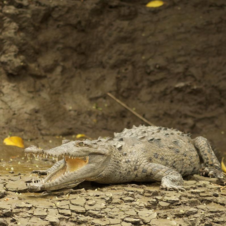 Parque Nacional Palo Verde en Guanacaste