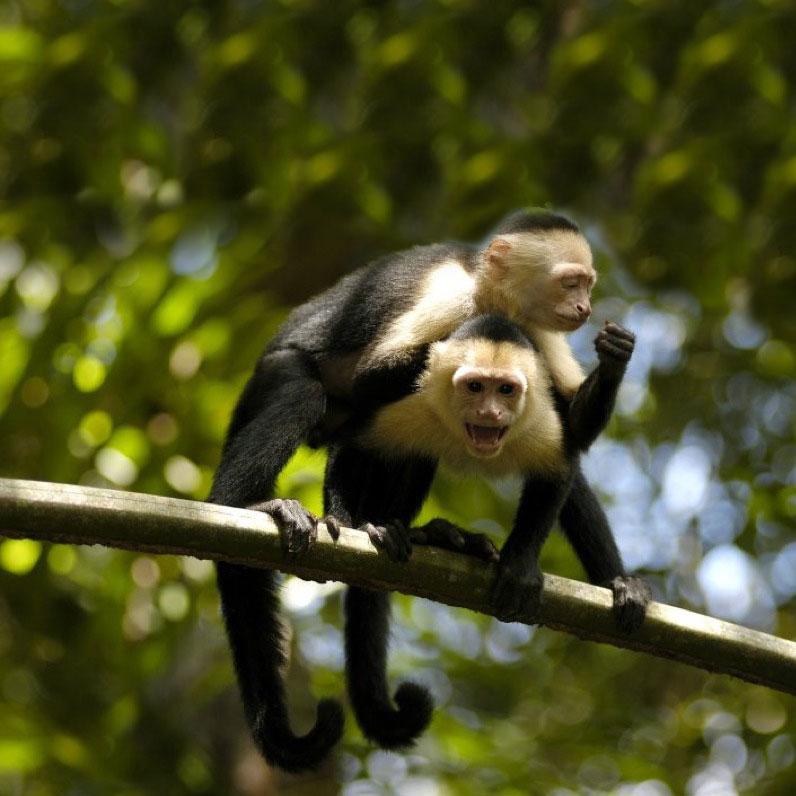 Tour Parque Nacional de Costa Rica