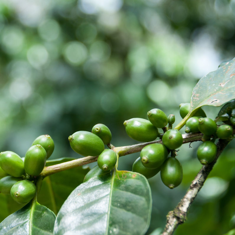 Parque Nacional Palo Verde y tour de café
