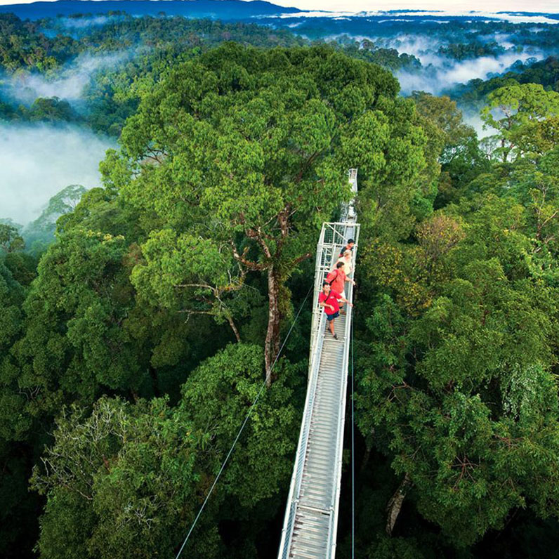 Puentes Colgantes de Selvatura en Monteverde