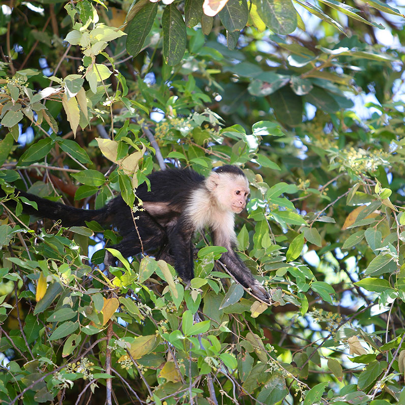 Costa Rica Parque Nacional Santa Rosa