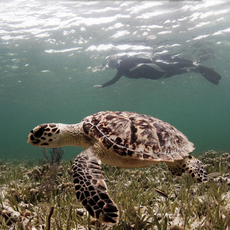 Las Baulas Marine National Park in Guanacaste