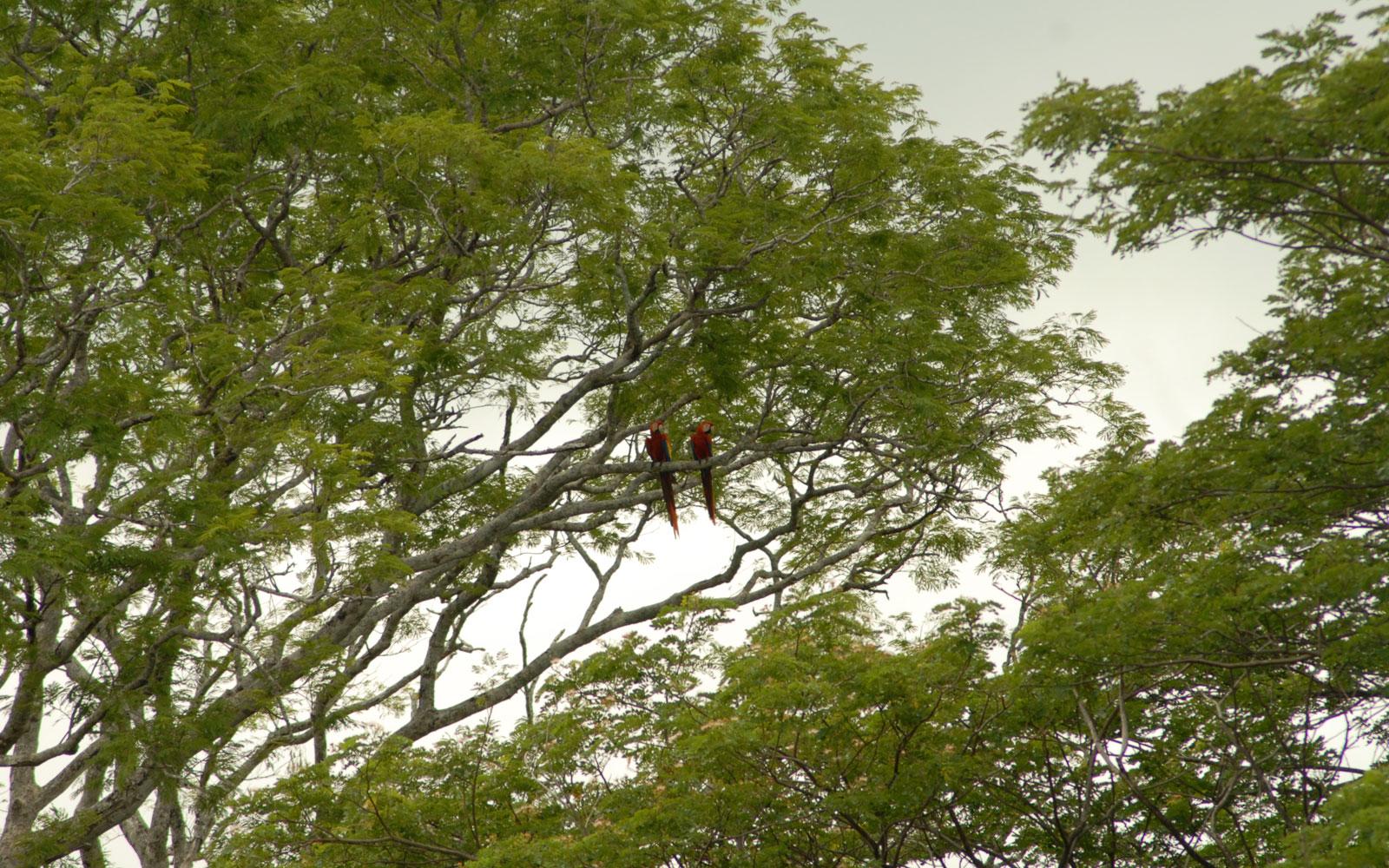 Enjoy Canopy tour nearby Costa Rica