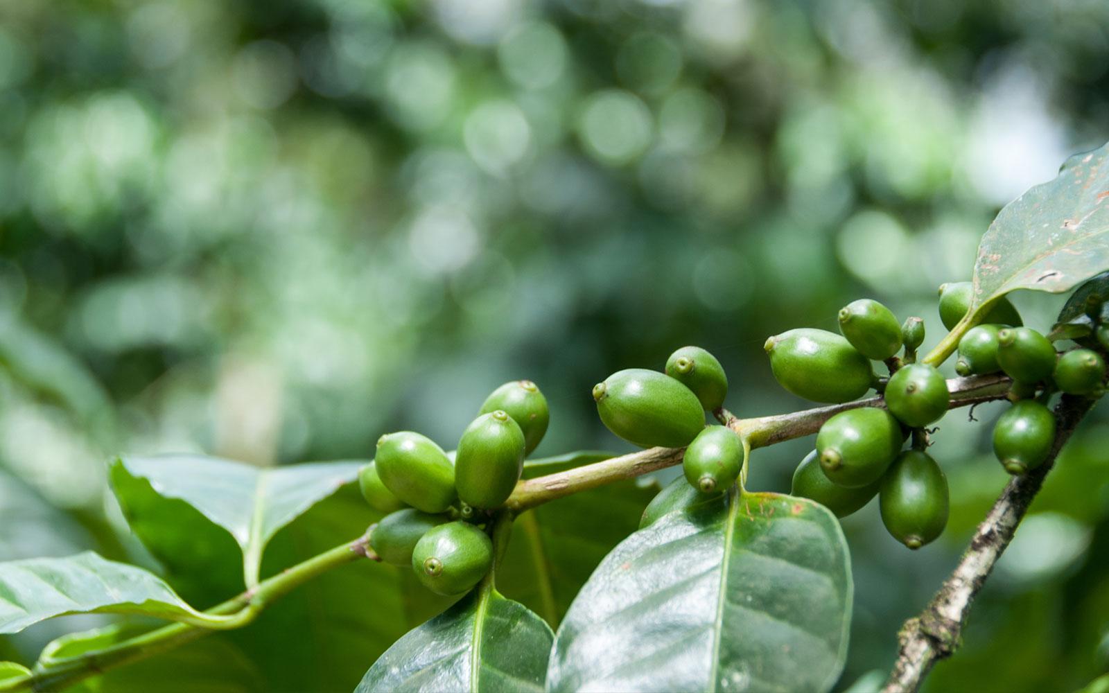 Palo Verde National Park & Coffee Tour of Costa Rica